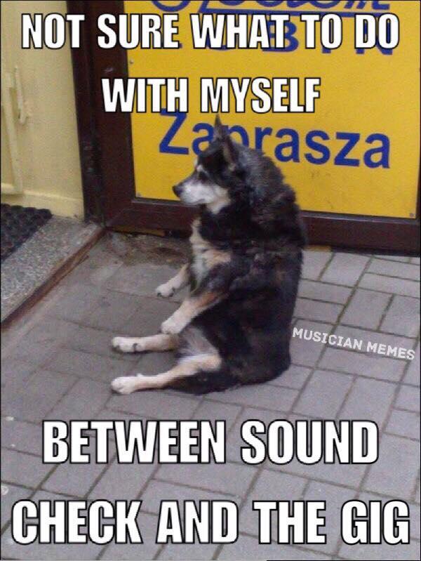 Dog sound check