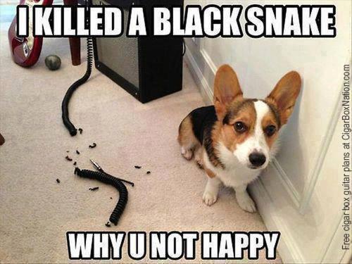 Dog killed snake
