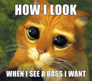Cat wants bass