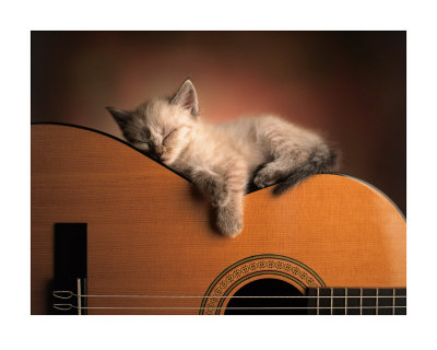 Sleepy guitar cat
