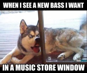 Dog window bass