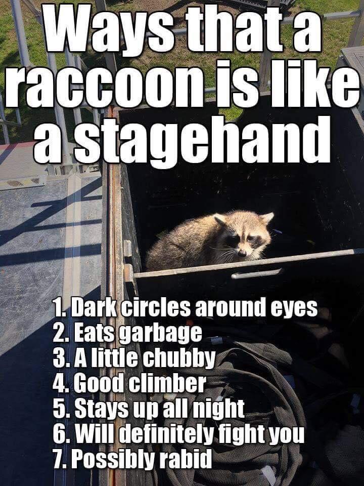 Raccoon stagehand