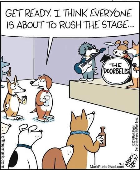 Dogs rush stage