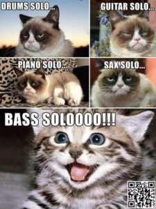 Bass solo cat